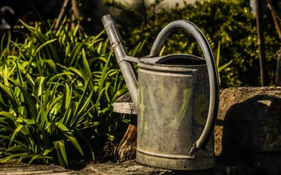 How to save water in the garden